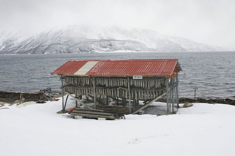 File:Cod drying in Lyngen.JPG