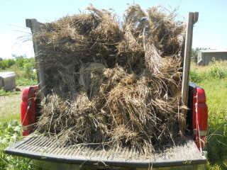 Wheat Sheaves in the Truck