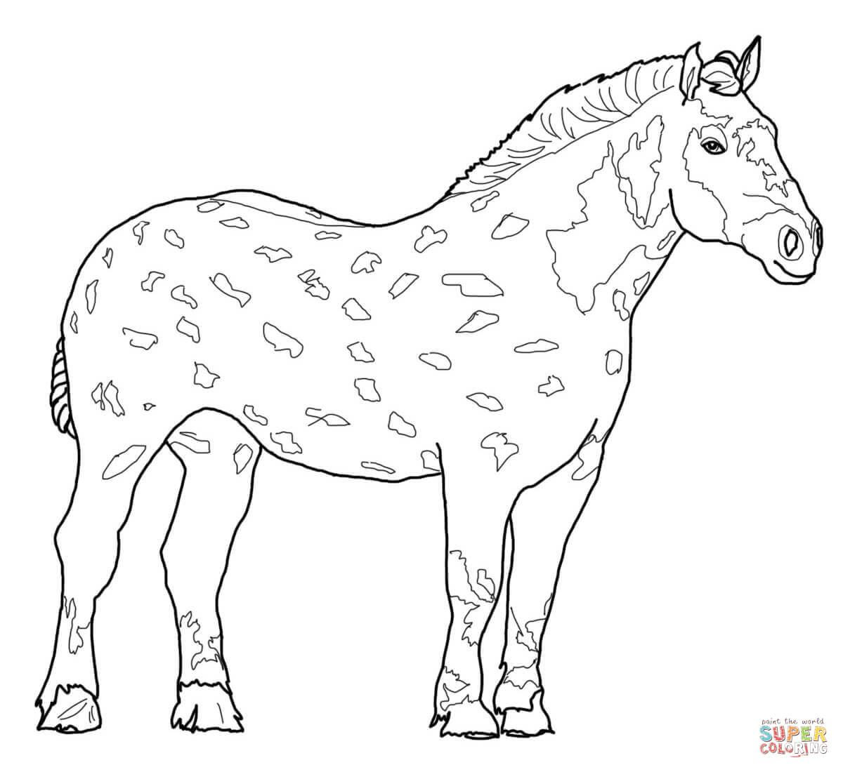 Miniature Horse Coloring Pages at GetColorings.com | Free ...