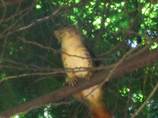 squirrel_july3_06