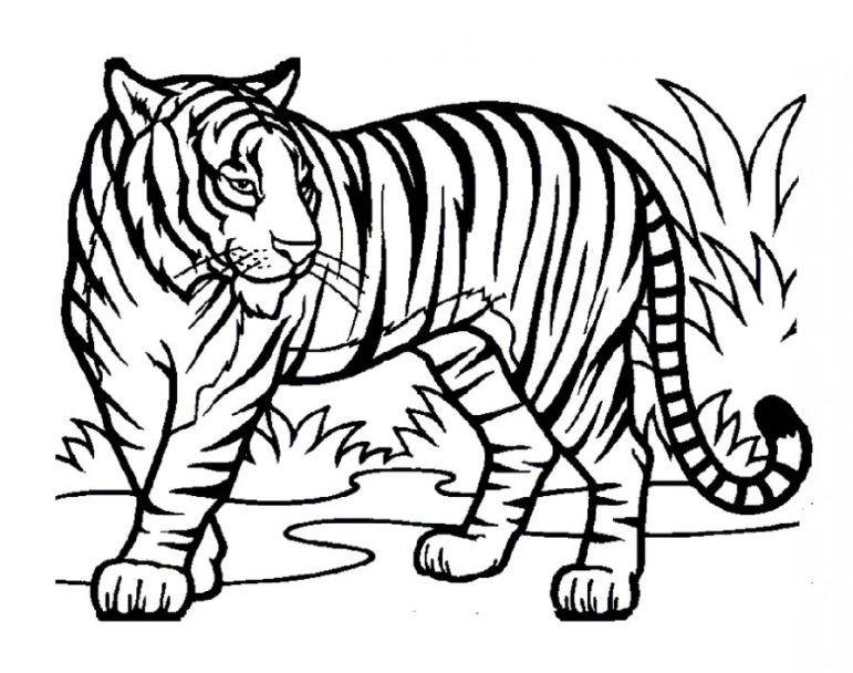 malvorlagen tiger kostenlos  dorothy meyer grundschule