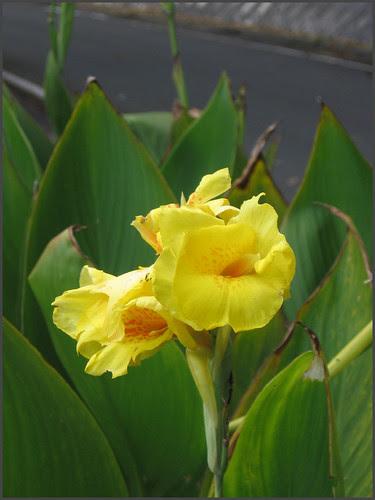 06 yellow flowers