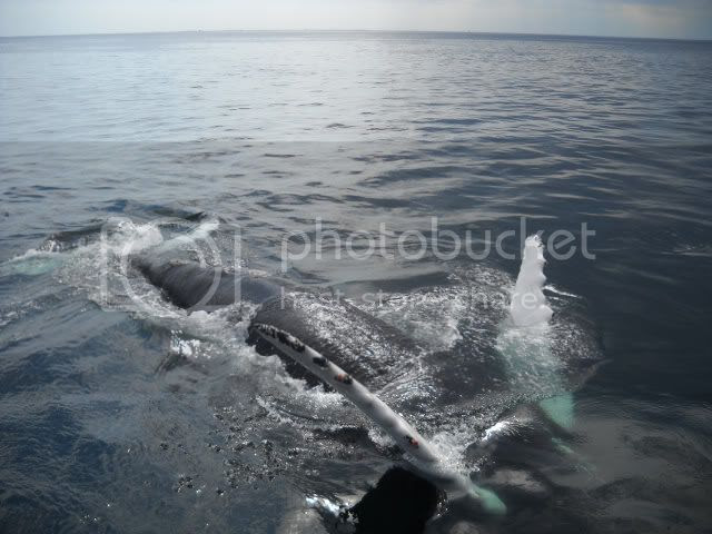 Our whale