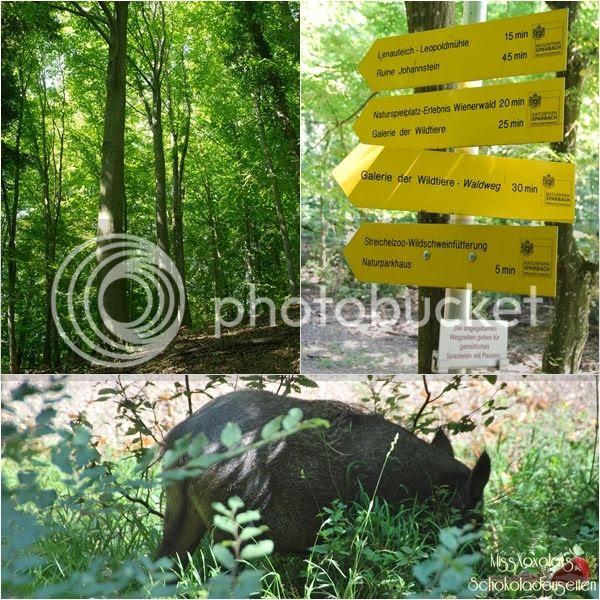Naturpark Sparbach Wildschwein