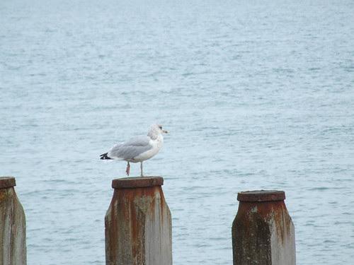 Eastbourne 006
