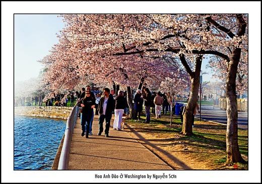 013 Mùa Xuân Washington