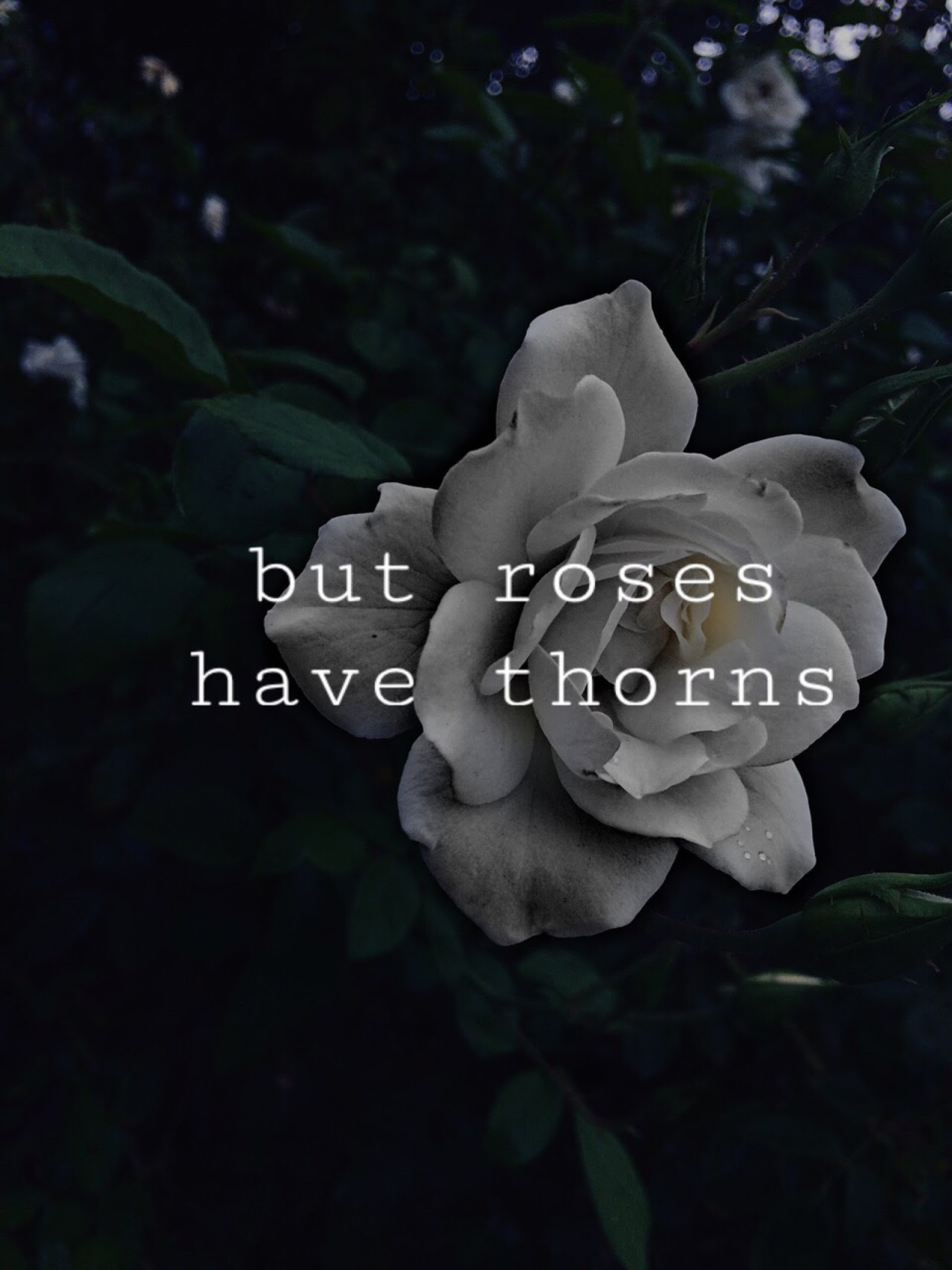 Hoontoidly Roses Tumblr Quotes Images