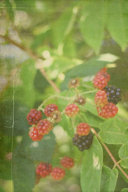 Berry Bramble