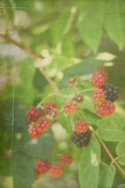 Berry Bramble