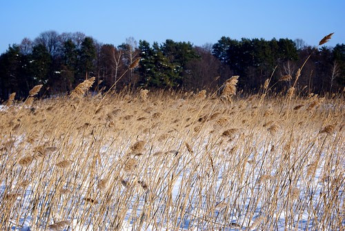 Trakai at winter