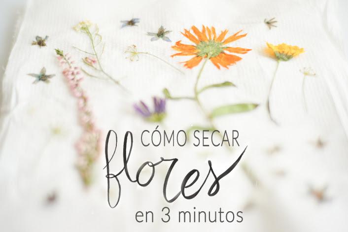 Comprar Cuadros De Flores Secas