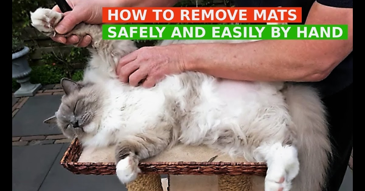 how to comb out matted cat hair
