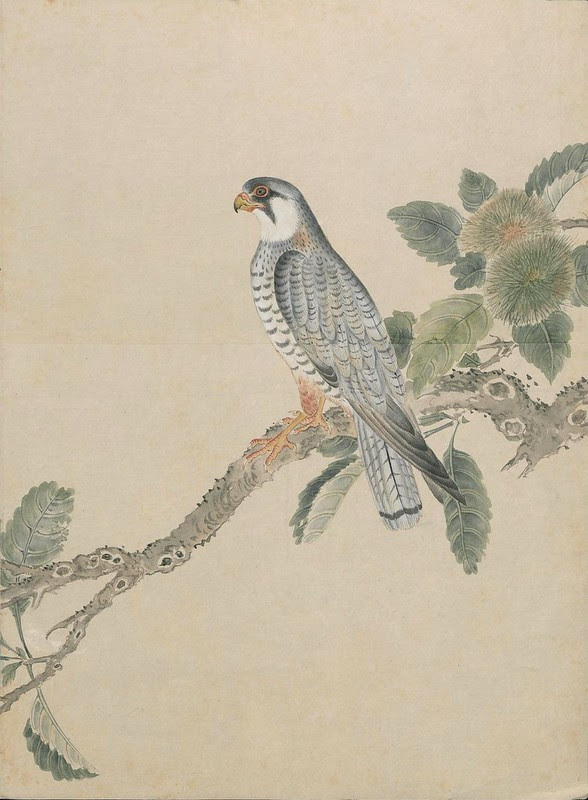 Ink + Watercolour  Bird sketch h