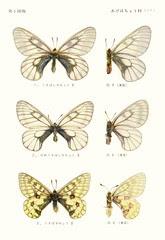 papill 1