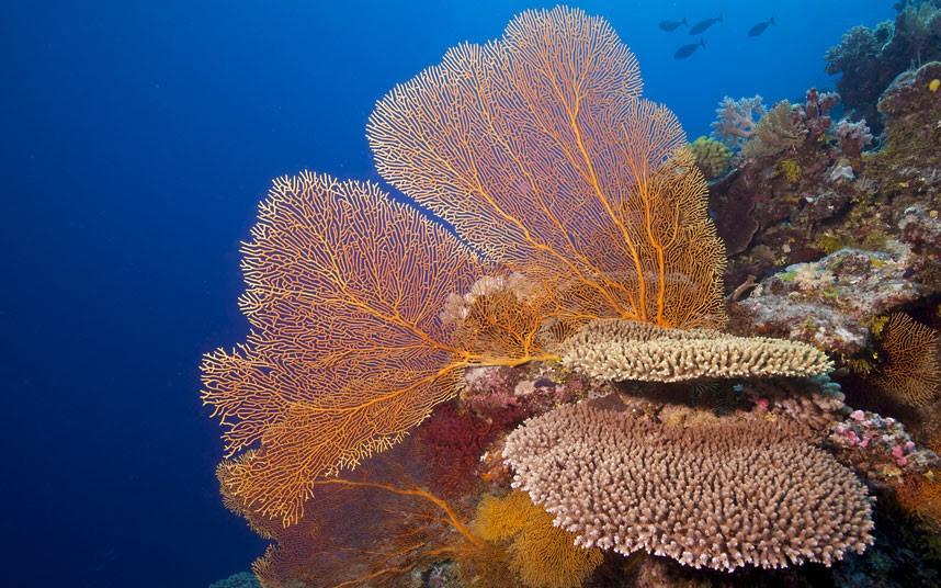 Parakseno.gr : coral 2 Ο μαγικός κόσμος του μεγάλου κοραλλιογενούς υφάλου
