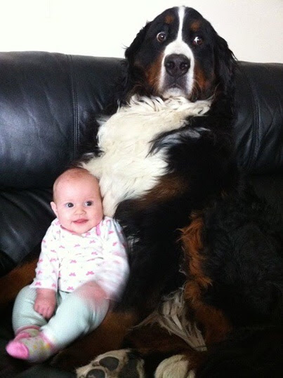 dog with baby, imgur dog baby, imgur dog what do I do with it, dog and little baby, funny dog pictures