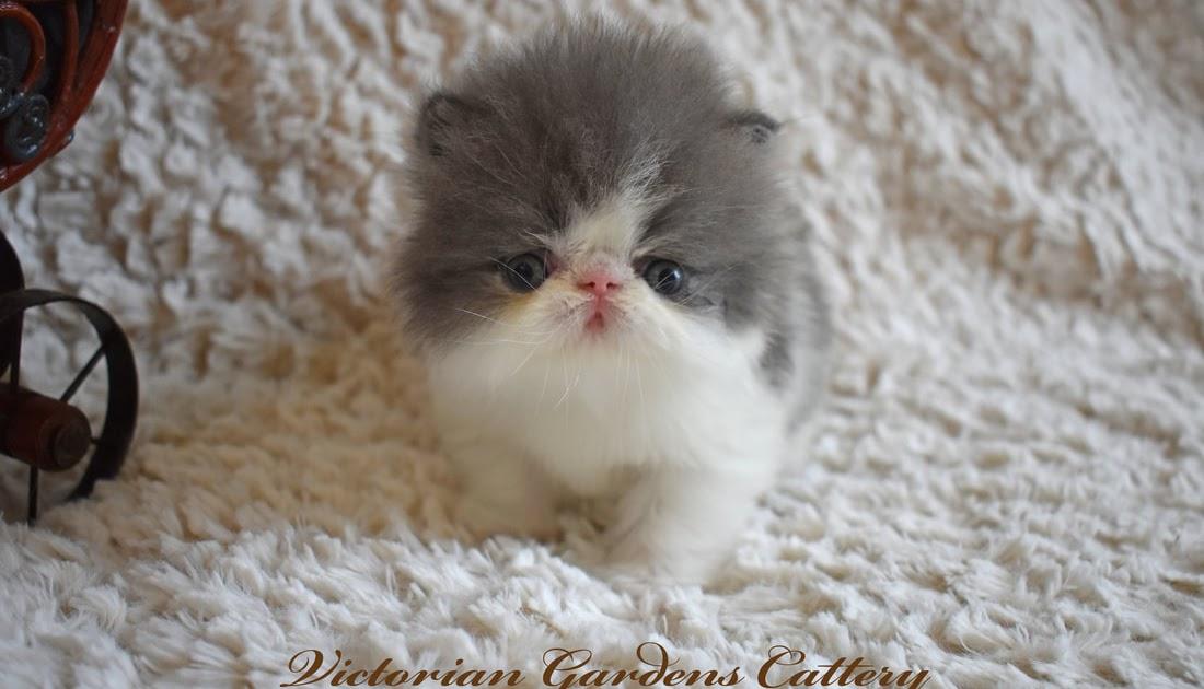 Carolina: Adoption Free Kittens Craigslist