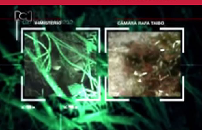 Supuesto extraterrestre hallado en Bogotá, Colombia