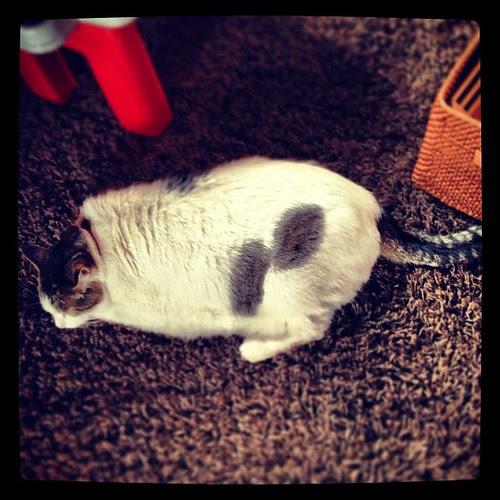 Half slug, half cat