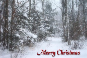 Snow shrouded woodland with Merry Christmas wish