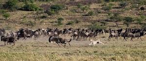 Get Richard Branson Safari Lodge Kenya Images
