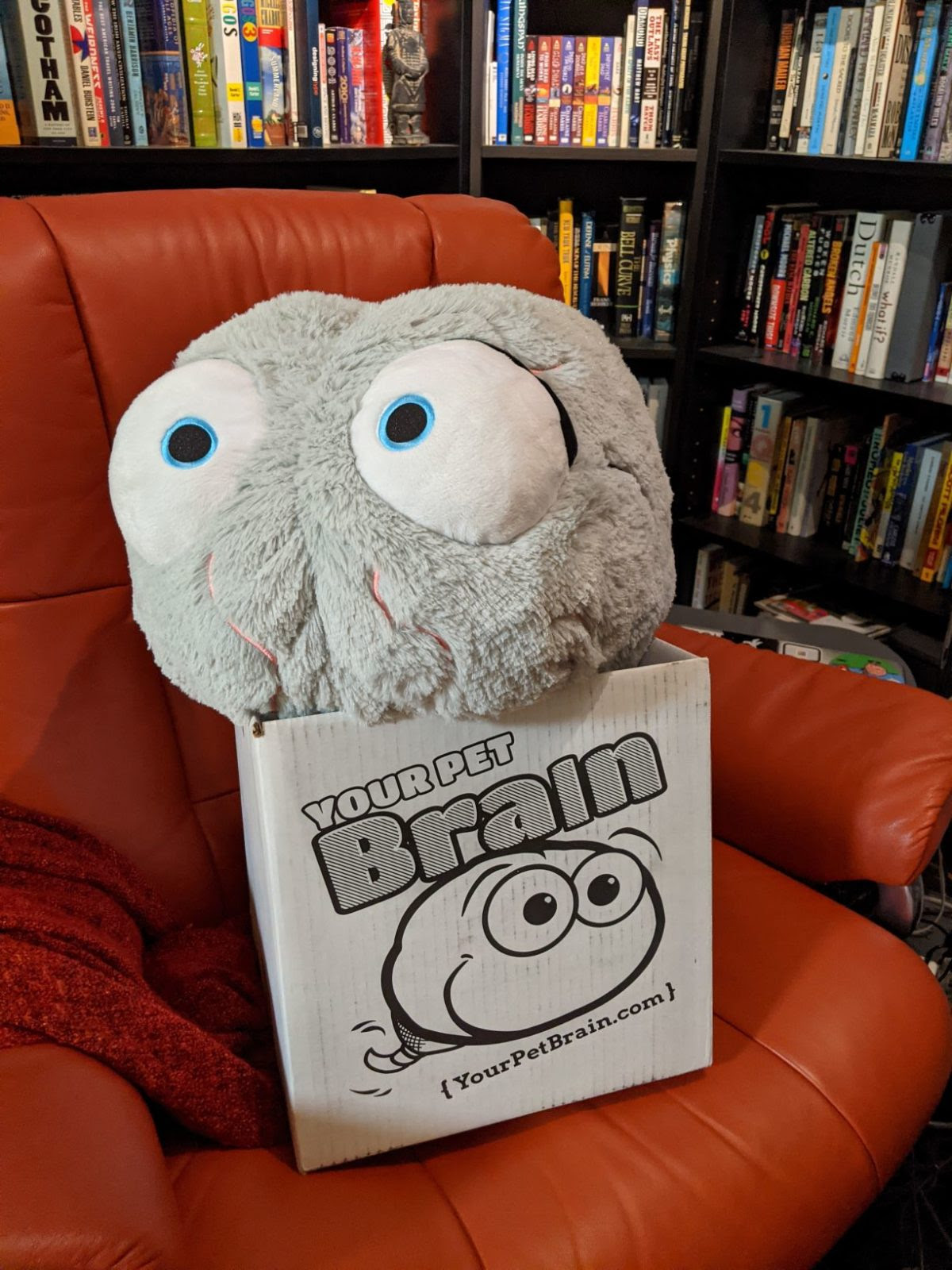 A gray plush brain with big eyes sits on the box he sipped in. The box has an illustration of him.