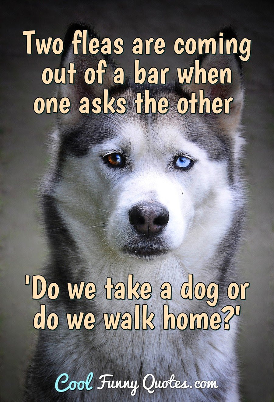 Dog Quotes - Cool Funny Quotes