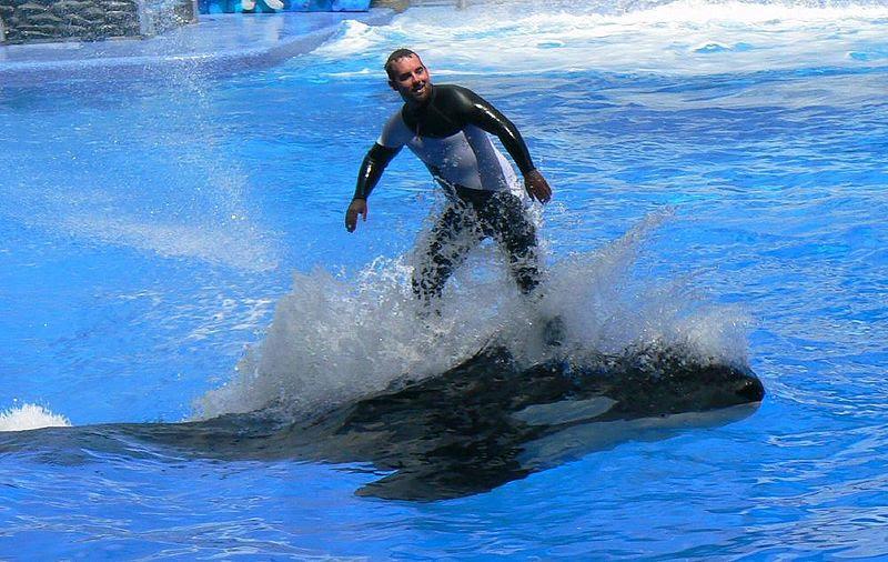 File:SeaWorldORL08-04-01a.JPG