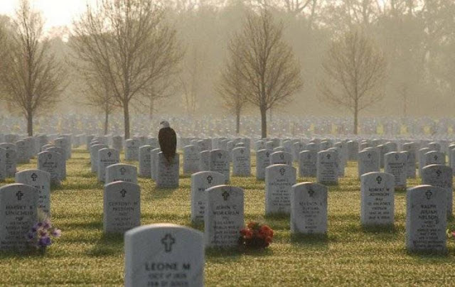 eagle-in-cemetery