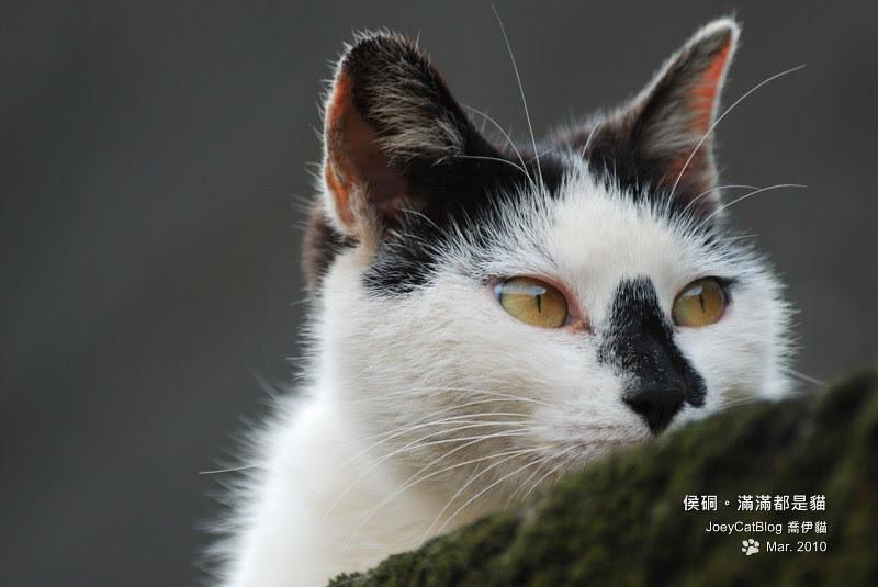 2010_0330_侯硐。滿滿都是貓DSC_0018