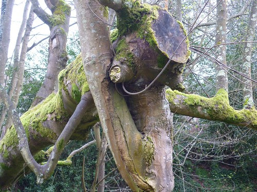 Spooky tree 1
