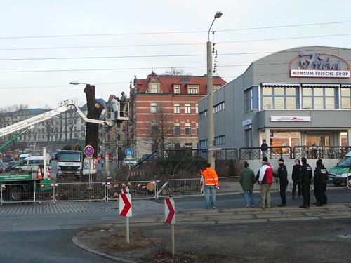 Baumfällarbeiten an der Bautzner Straße (07)