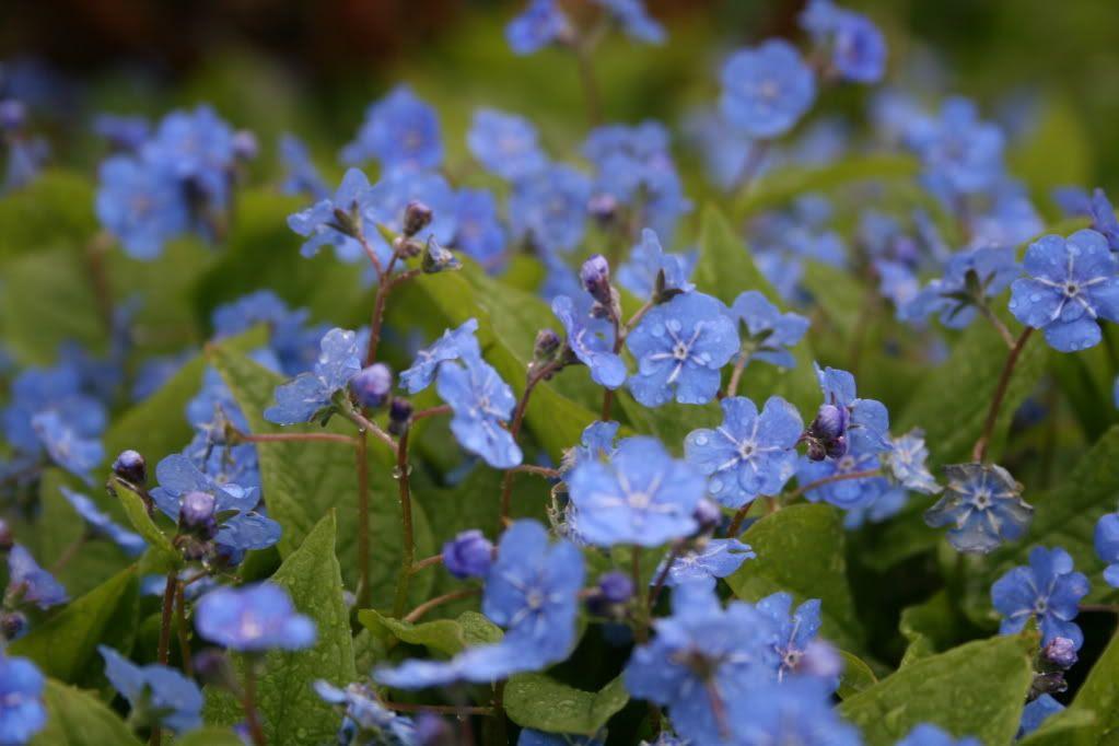 Nydelige blomster