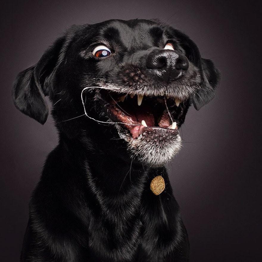 fotos-perros-expresiones-faciales-comida-christian-vieler-2 (6)