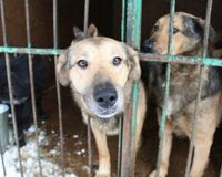 STOP Russia from legalising concentration camps for stray cats and dogs