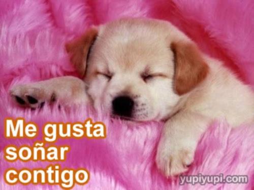 Cachorros Tiernos Con Frases De Amor Imagui
