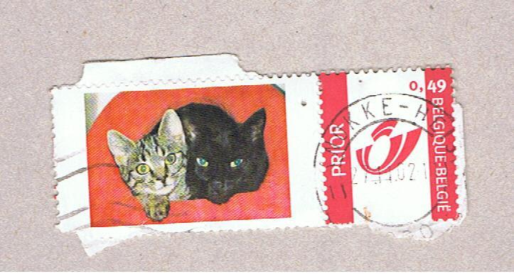 Image chat noir et chat tigré dans panier couleur
