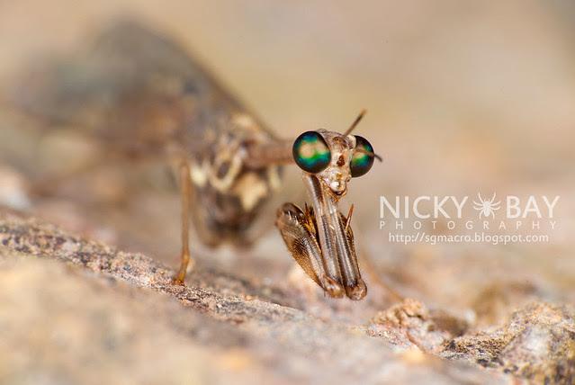 Mantidfly (Mantispidae) - DSC_4207