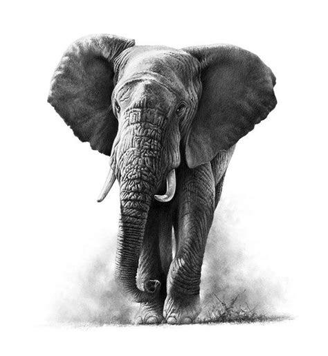 ideas  realistic elephant tattoo  pinterest