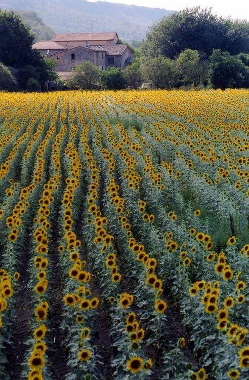 Acres of sunshine