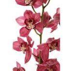 Fresh Cut Orchids: Wholesale Orchid   Bulk Dendrobium