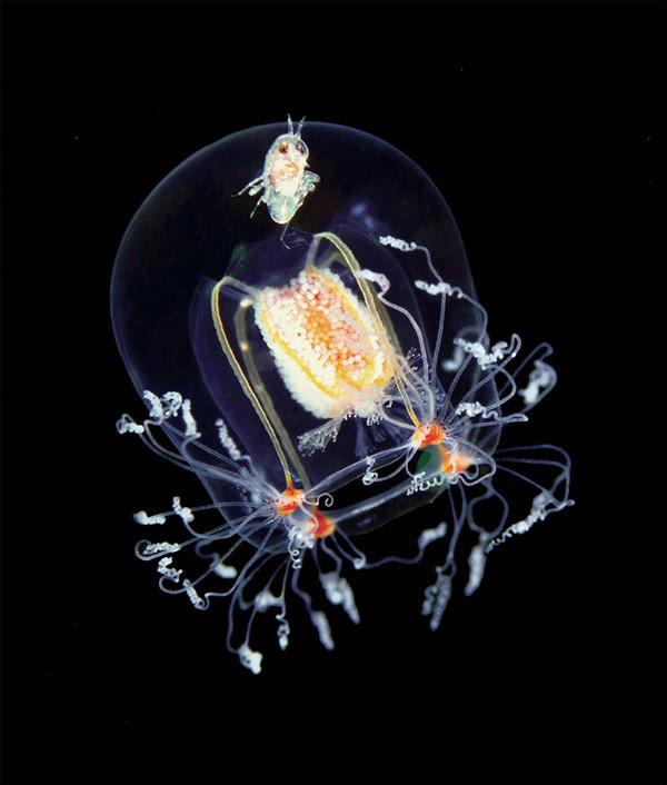 perierga.gr - Απίστευτης ομορφιάς πλάσματα της θάλασσας