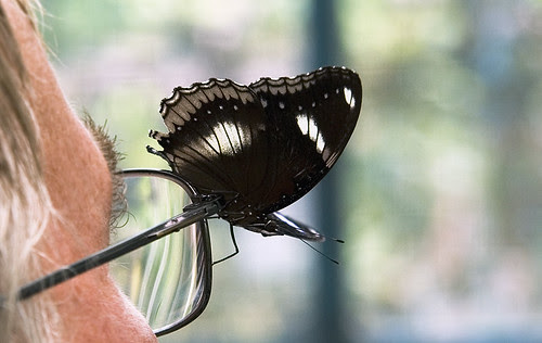Butterfly on glasses