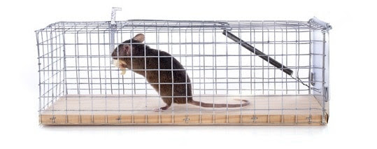 Humane mouse trap with mouse inside