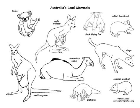 australian outback coloring pages coloring page