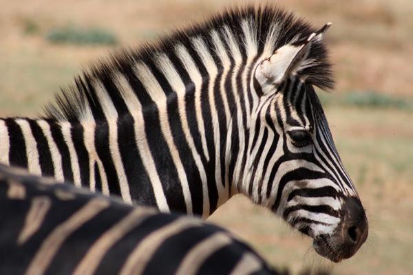 Fotógrafo participou de safari e aproveitou para montar imagens raras da fauna africana