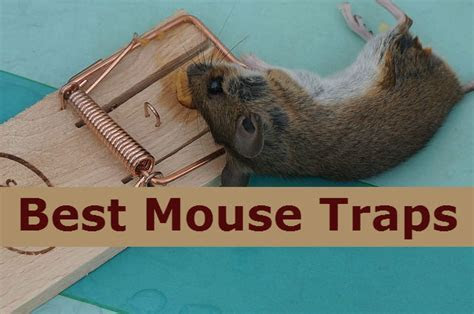 16 Best mouse traps that works for home, kitchen and garage
