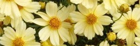 ✿ Heritage Perennials Website