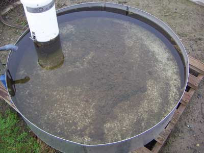 evaporation pan