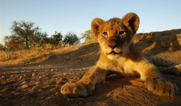 Parcul Naţional Kruger - fereastra spre Africa sălbatică